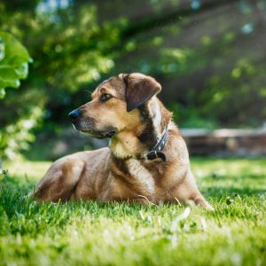 SchwarzraumMedia_Portrait_Outdoor_Hund